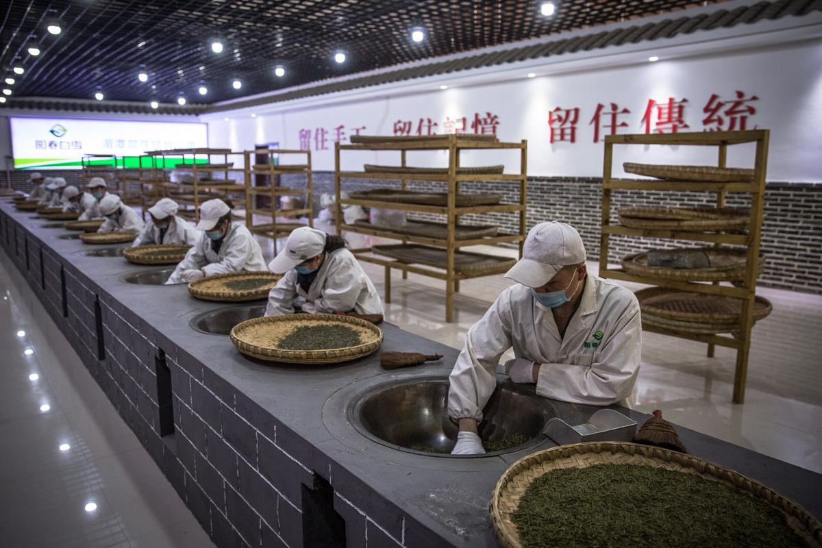 Tea Plantation - 3.jpg