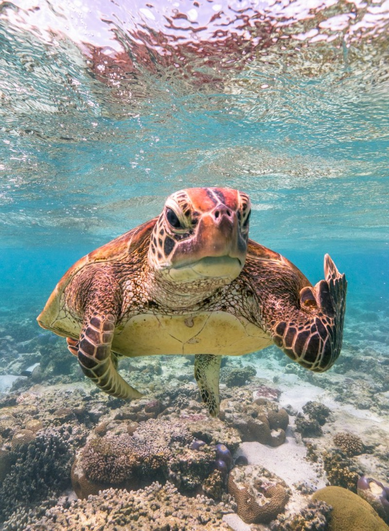 Finalists for the 2020 Comedy Wildlife Photography Awards