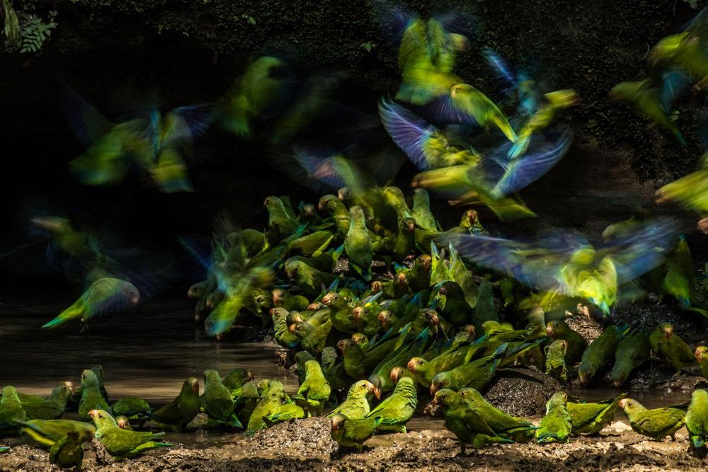 The 2018 Audubon Photography Awards