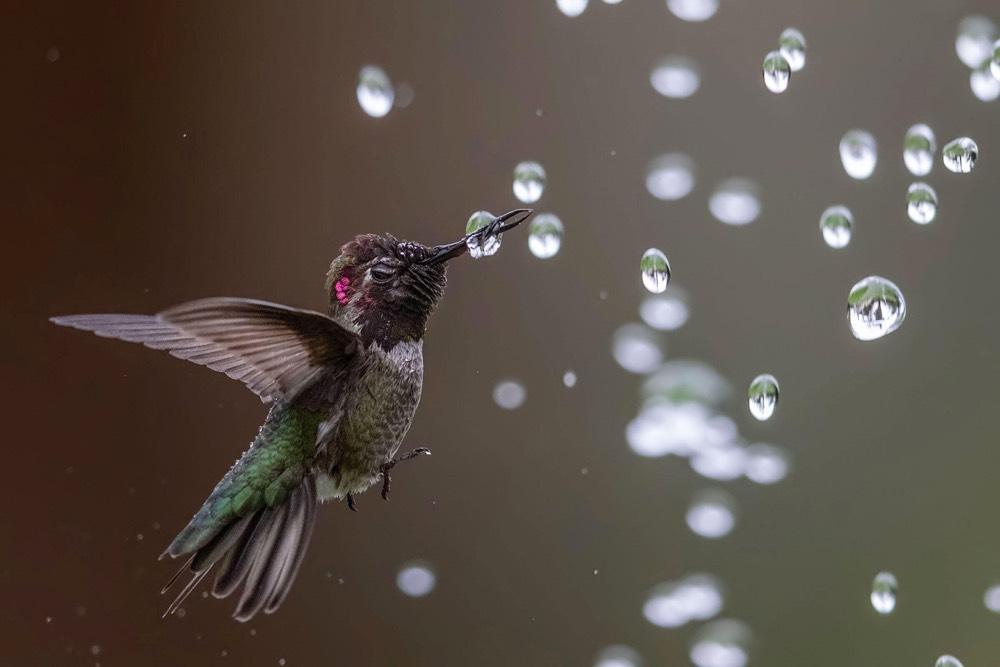 Audubon 2020 Contest