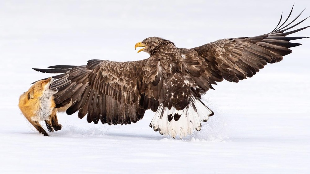Bird Photographer of the Year 2021 finalist