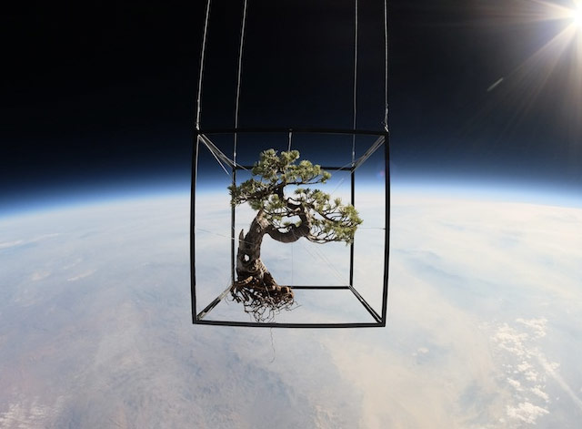 Bonsai in space