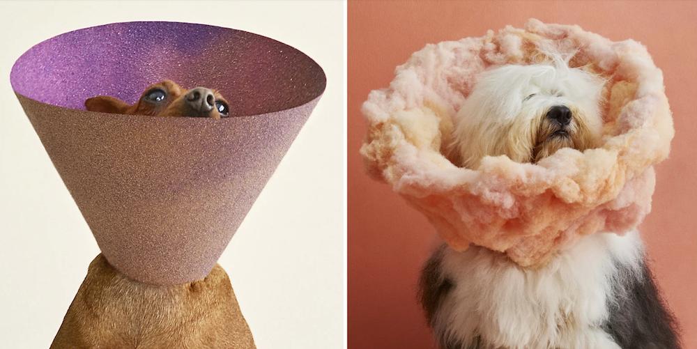 cone-of-shame-mishka-ryder-dog-portraits.png