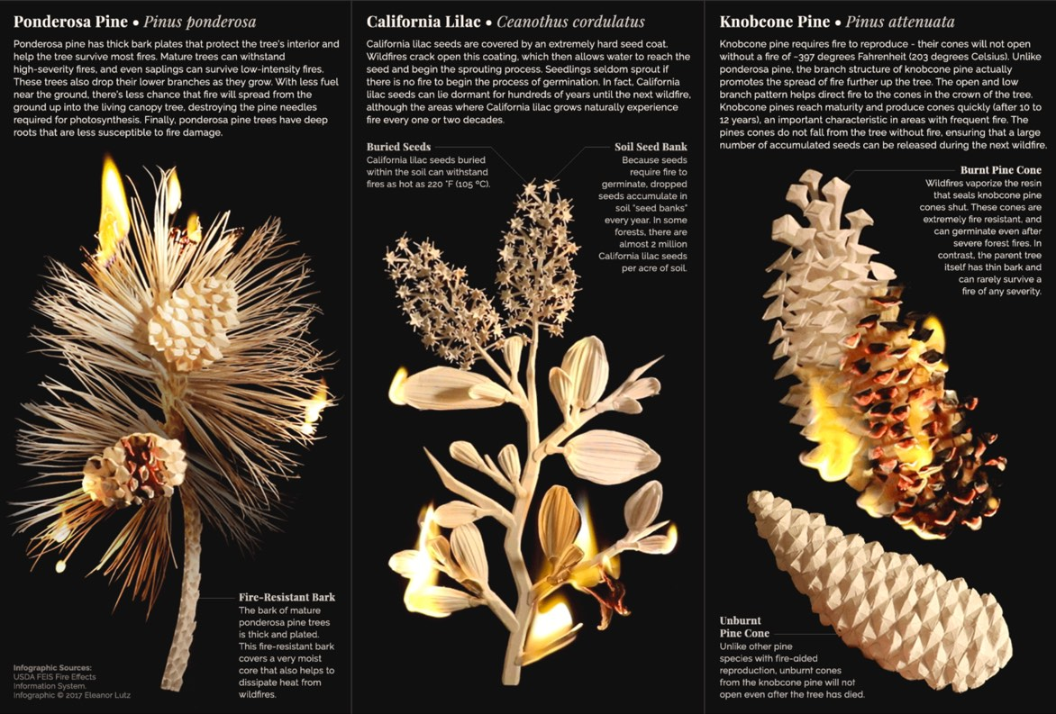 papercraft infographic of fire resistant plants