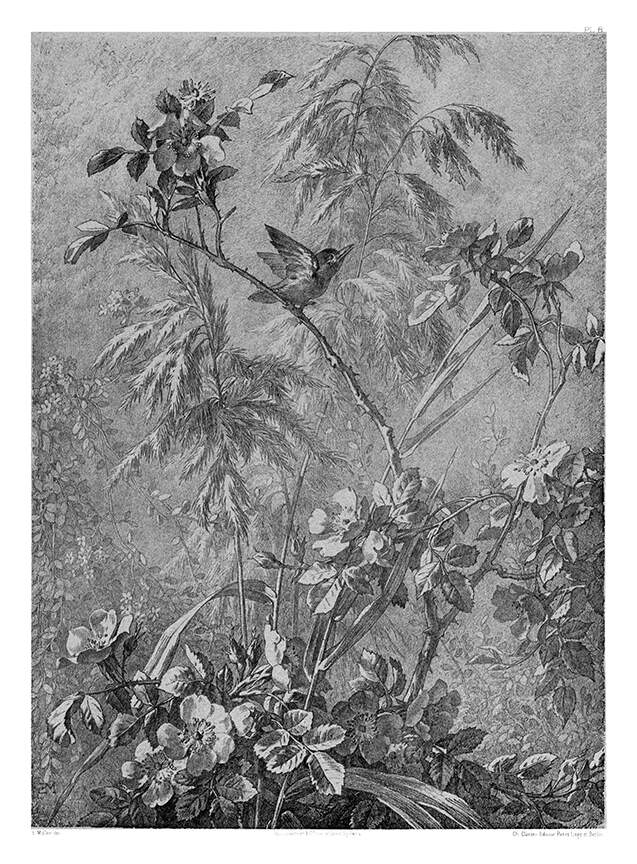 Flore pittoresque--Plate 8