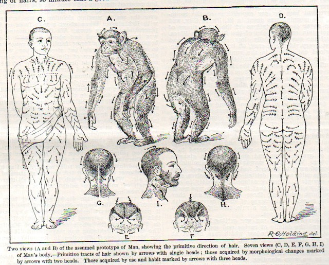 Human Body Hair Flow Maps
