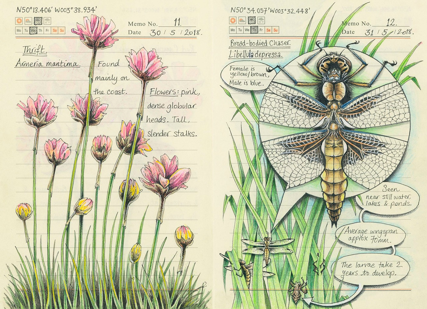 Jo Brown's illustrations from a Devon wood