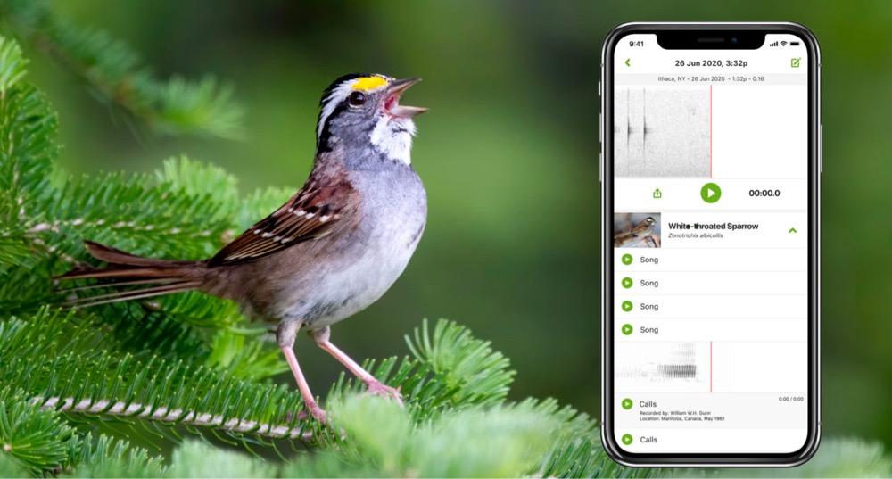 This App Identifies Birds by Their Songs