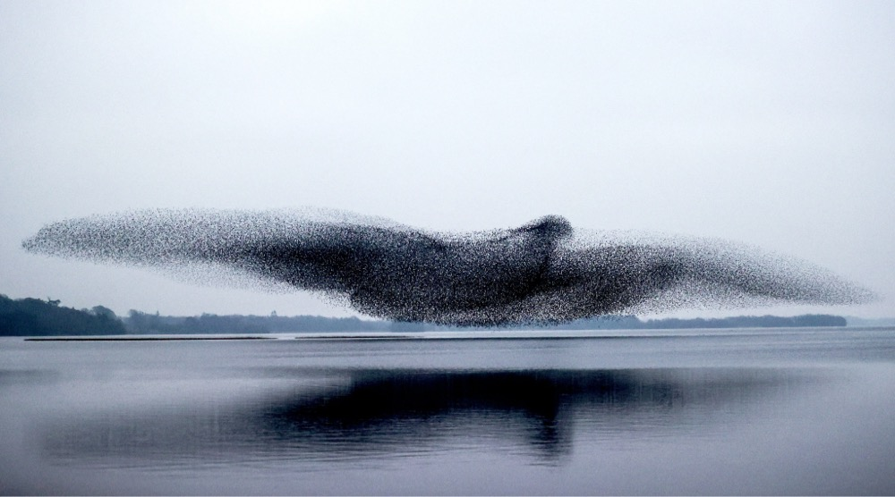 Murmuration Bird Shape