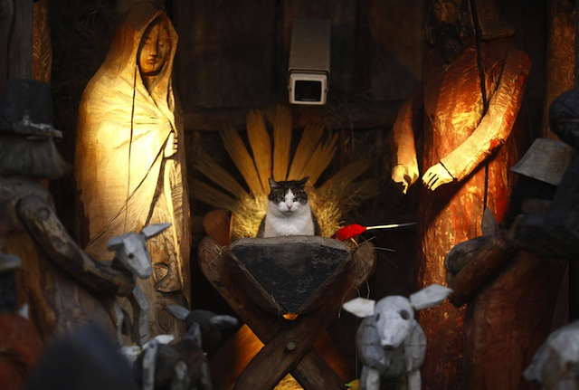 nativity-cat.jpg