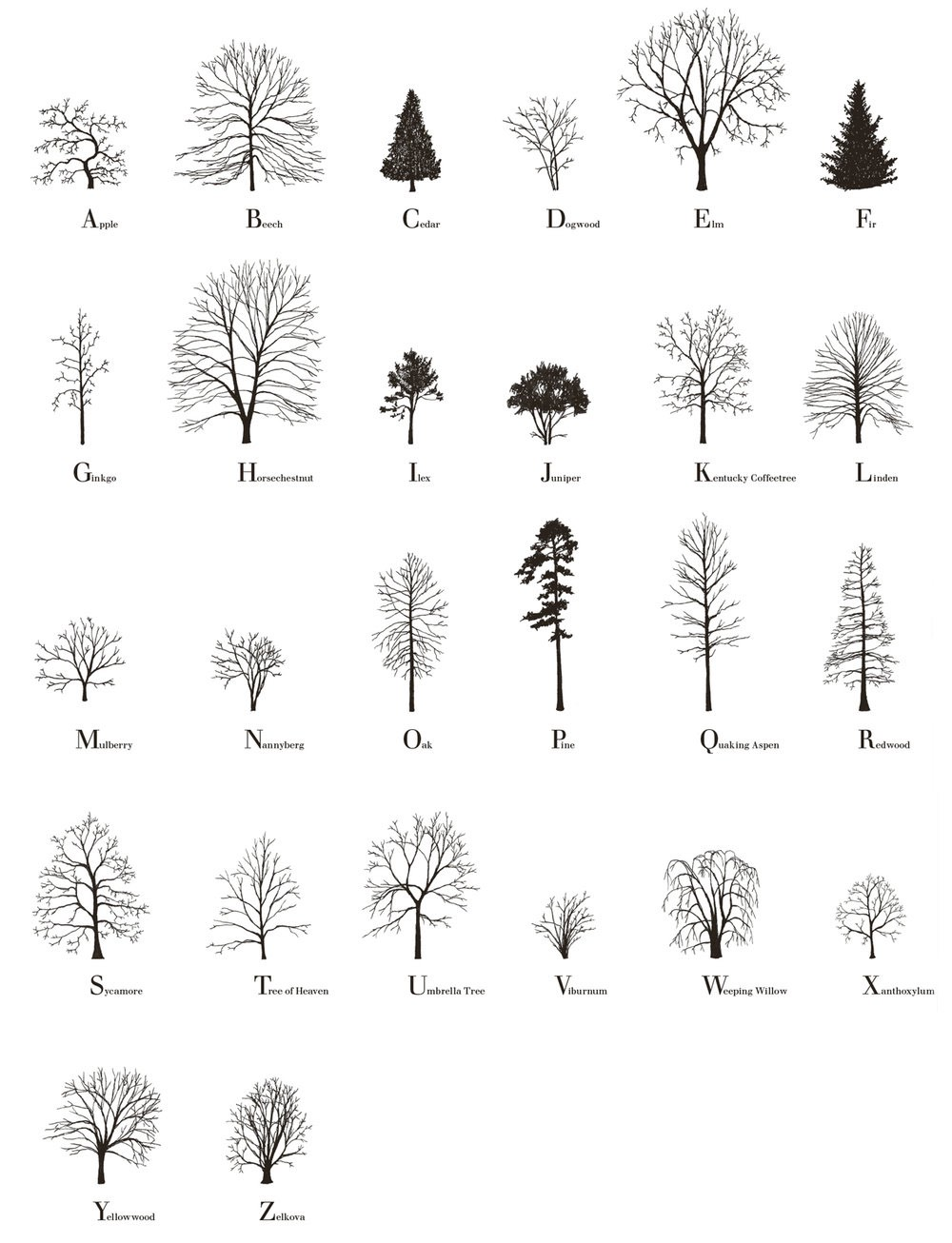 short essay on uses of trees Open document below is an essay on importance of trees in our life from anti essays, your source for research papers, essays, and term paper examples.