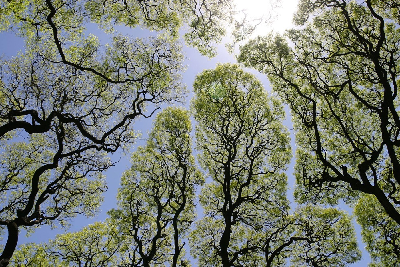 Tree Crown Shyness