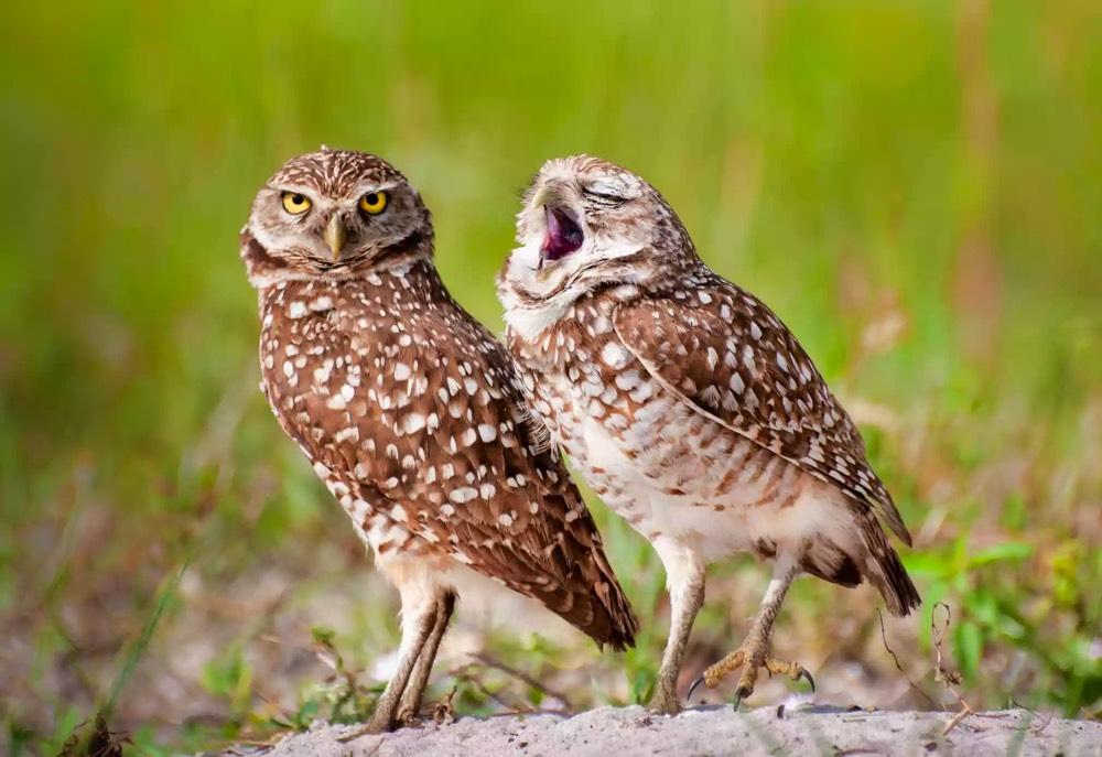 Wildlife Comedy