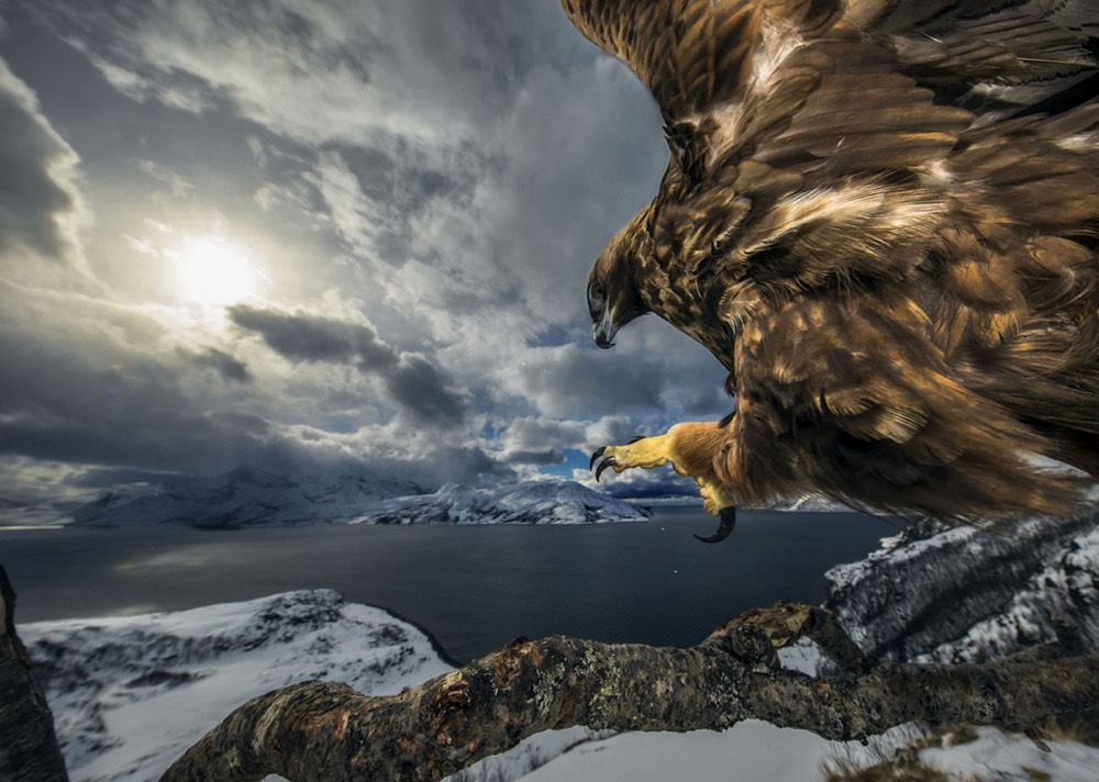 The Winners of the 2019 Wildlife Photographer of the Year